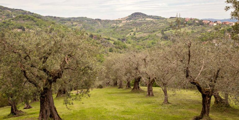 21-s495-olive trees view