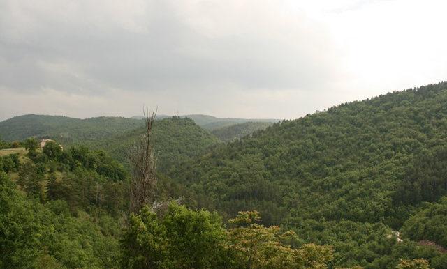 7-panoramic view