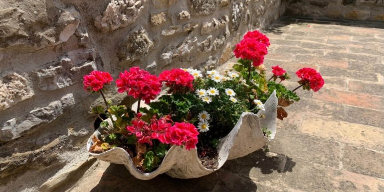 6-s574-flowers-Prato di sopra